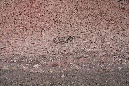 Digital Desert #2