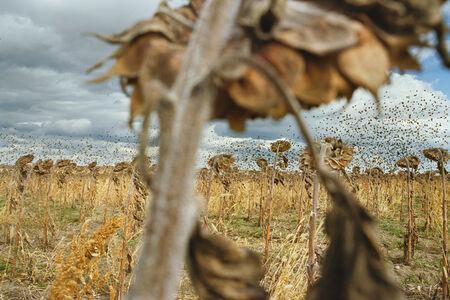 Black Birds, Near Gray Goose, South Dakota (from the series My Dakota)