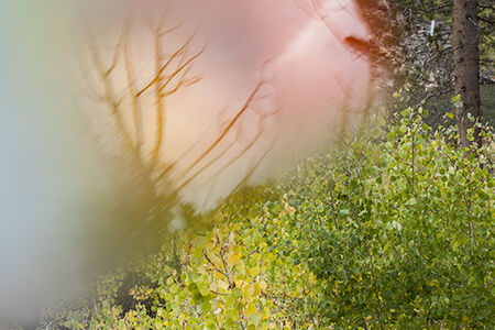 """""""Lundy Canyon 2014, Reflections #2"""""""