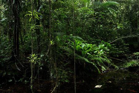 Rainforest, Vale do Ribeira, São Miguel Arcanjo, São Paulo, Brazil