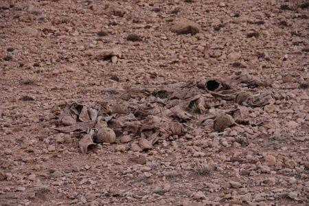 Digital Desert #1