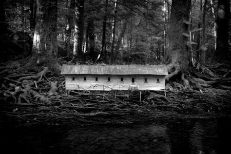 Duckweed Palace