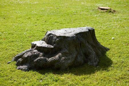 Bronze Tree Stump
