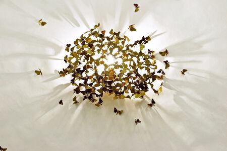 Limited Moths