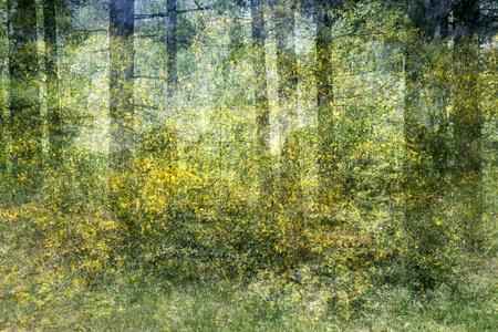Untitled (Bikbergen)