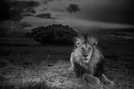 C-Boy, Serengeti National Park, Tanzania, 2012