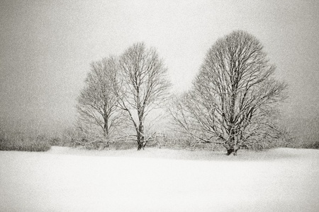 Three Lindens in a Snowstorm, East Hampton