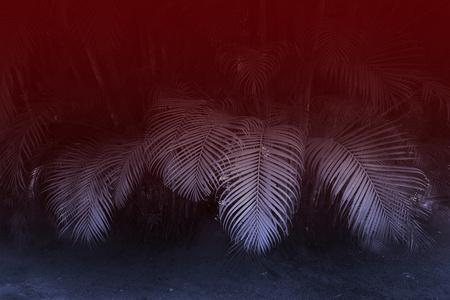 'Palmshade'