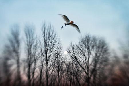 Dream of Flying