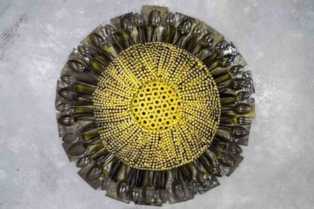Small Sunflower IV