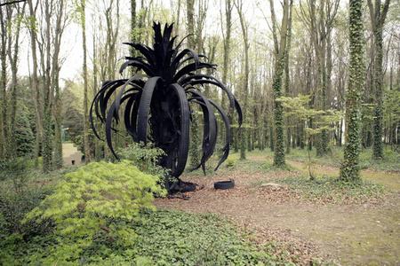 Icarus Palm