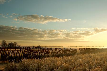 Sunrise on Judice Fields
