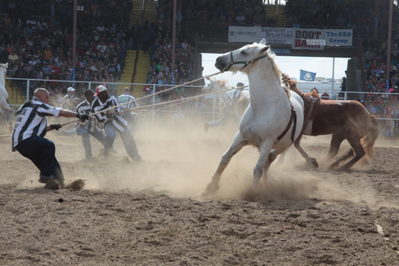 Angola Inmates breaking wild horses, Angola State Prison Rodeo