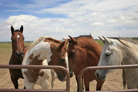 Horses, New Mexico