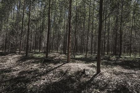 Piet Retief plantation, where a gravesite used to be