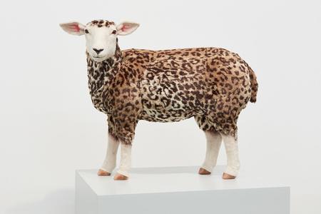 Leopard Sheep
