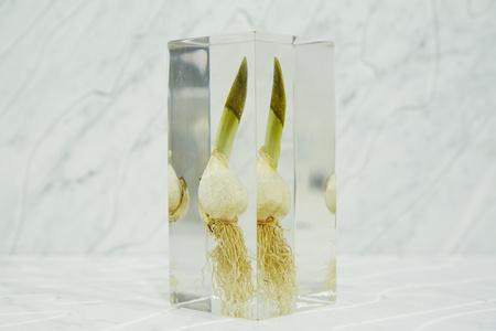[acrylic bulb #5]