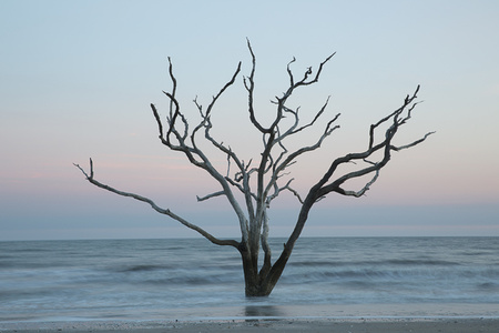 Tree in the sea (#5)