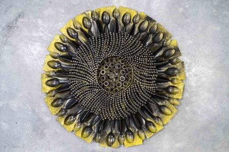 Small Sunflower VI
