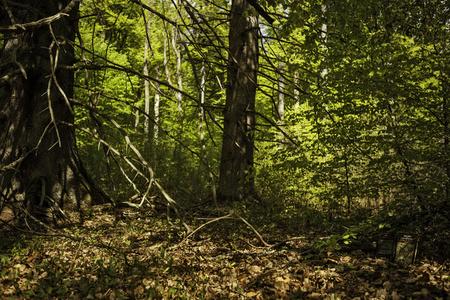 A vida nos bosques
