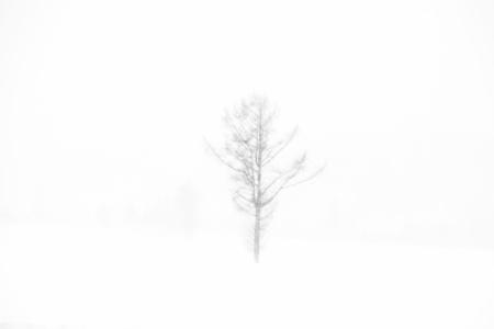 Untitled. Sapporo, Japan.