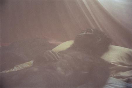 Nabua Monkey, 2008