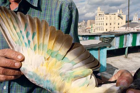 Havana, Cuba (from the series Violet Isle)