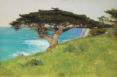 Point Lobos, Veteran Tree (Monterey)