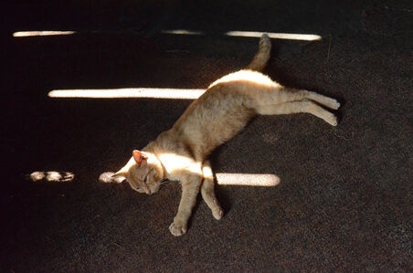 Cat in Sun, from the series Constellations