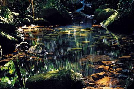 Riacho da Cachoeira Grande, Ilha do Cardoso, Sao Paulo, Brazil