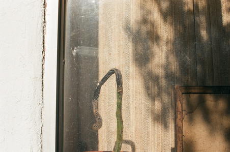 Untitled (Window and Cactus)