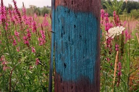 Blue Pole