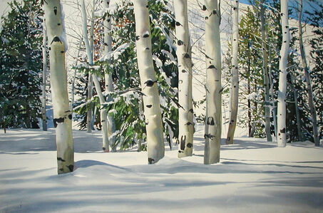 Winter Aspens North of Ketchum