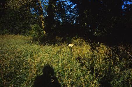 Shadow, Cowpasture Lane, Suffolk