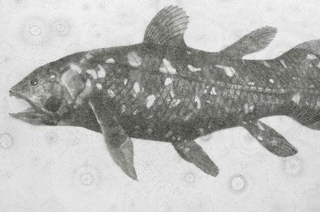 Gombessa (Coelacanth)