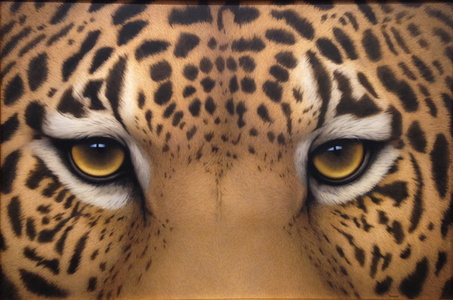 Jaguar Eyes