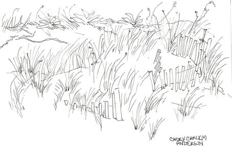 Undulating Dune Fence