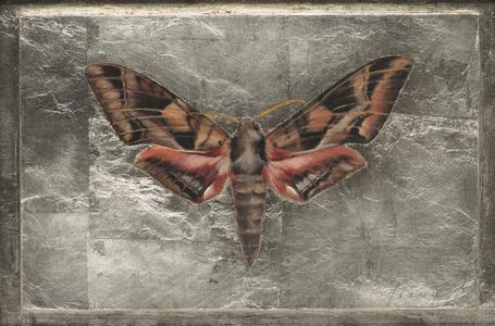 Typhoon Sphinx Moth (Eumorpha Typhoon)