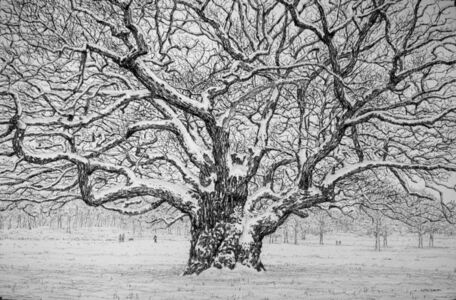 The Oak after the Snow Storm