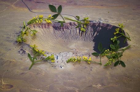 Ruta graveolens i.a. - Barrington crater, Arizona U.S.A.