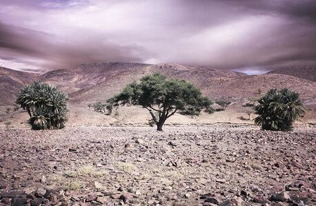 Morocco Atlas Three Trees