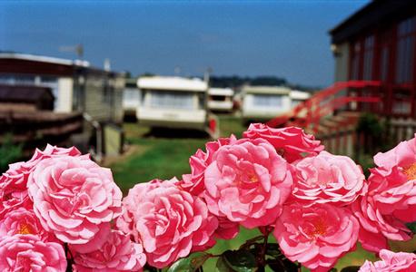 Flowers, West Bay, England