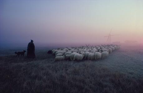 Racka Flock, Hortobágy, Hungary