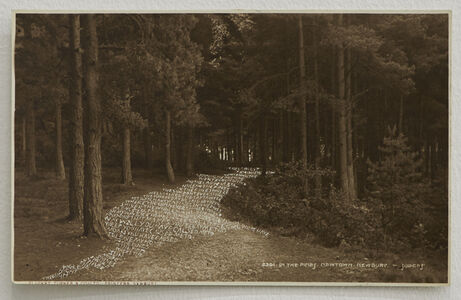 In the Pines (Revised Postcard)