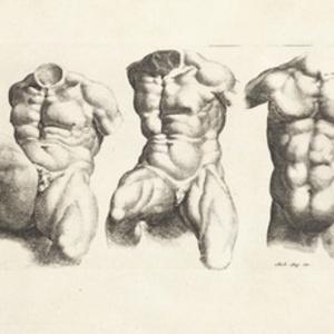 [Three male torsi]
