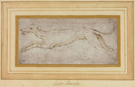 A leaping hound