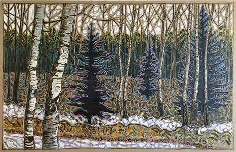 silver birch and fir trees