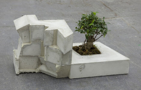Gebäude (Ficus)