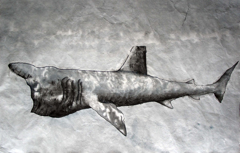 Bashing Shark