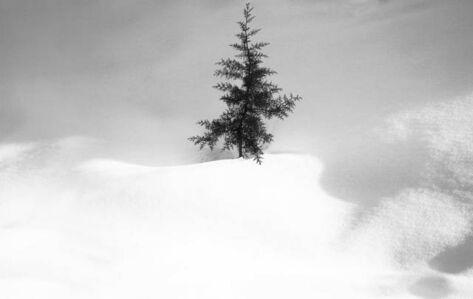 Snow No. 34